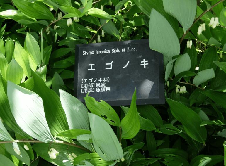 201604042 (1)